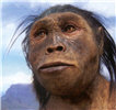 Homo habilis female