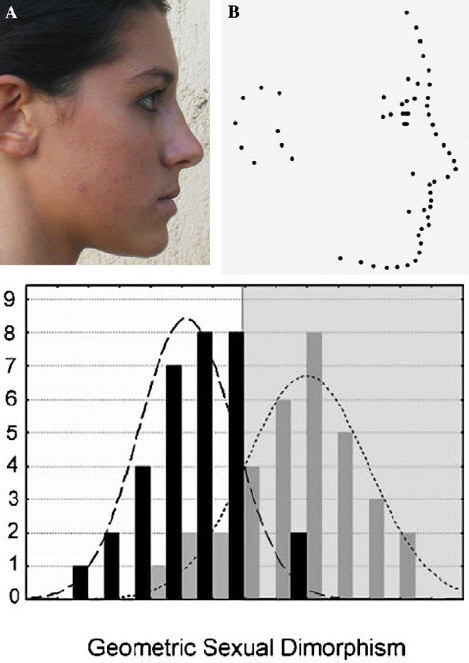 Sexual dimorphism distribution (faces).