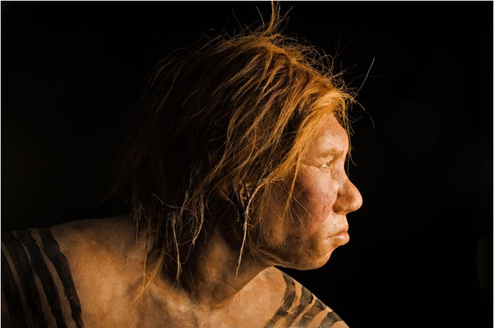 The face of the Neanderthal woman doesn't look feminine (Fig 1) when ...
