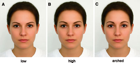 Eyebrow shape and position varied on a composite face.