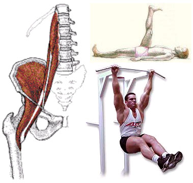 The hip flexors and some examples of hip flexion.